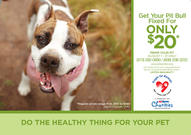 Get your pit bull fixed August 2014