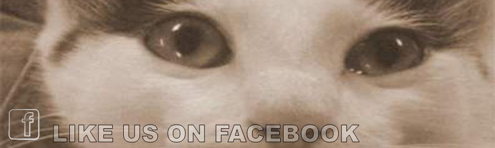 slide-Like-us-on-Facebook-eyes-1000x300