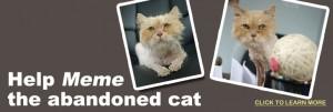 Help Meme the abandoned cat