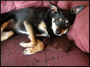 Dog Adoption - Mr. Pants - People For Animals