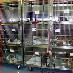 n order to decrease stress, cats are held in one of two designated cat rooms separately from the dogs, each in its own individual cage.
