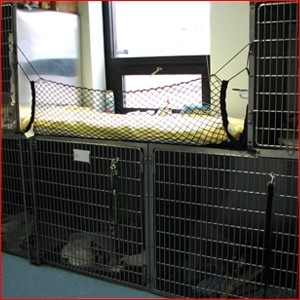 After surgery is complete, animals move into the recovery area where they are constantly attended by a veterinary technician until they are fully awake. Dogs at higher risk are also housed in this area so that closer supervision can be provided.